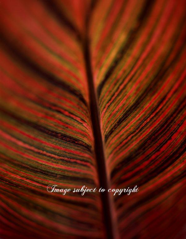 Orange Leaf Photograph wall art